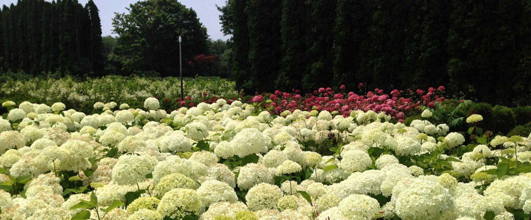 Sylvan Nursery offers the best plants, trees, and greenhouse variety in the Westport, MA area